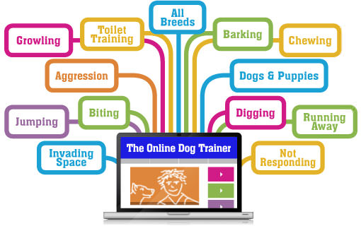 One-Stop-Dog-Training