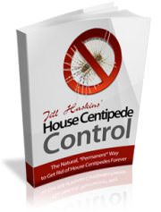 Easily Get Rid Of House Centipedes