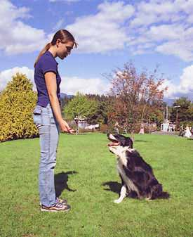 Dog Training - Pupy Training