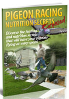Pigeon Racing Nutrition Secrets Exoposed